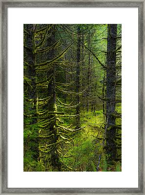 Framed Print featuring the photograph Mystique by Chuck Jason