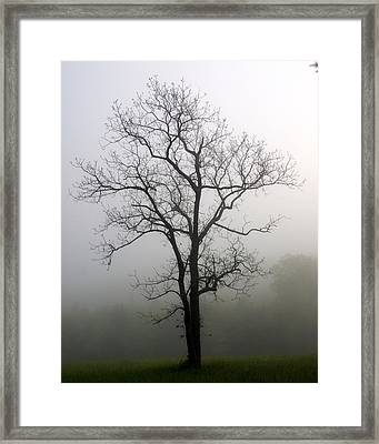 Mysty Tree 3 Framed Print by Marty Koch
