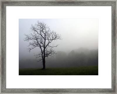 Mysty Tree Framed Print by Marty Koch