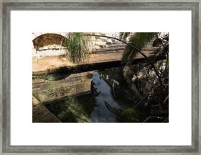 Mythical Arethusa - Wild Papyrus And Frieze Reflections Framed Print by Georgia Mizuleva