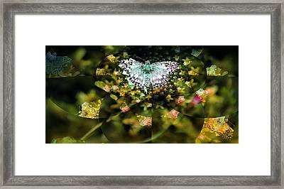 Mythical Butterfly  Framed Print