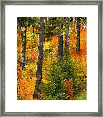 N W Autumn Framed Print by Wes and Dotty Weber