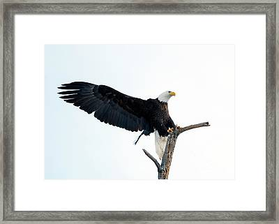 Nailed The Landing Framed Print by Mike Dawson