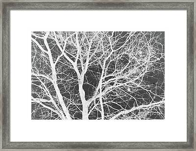 Naked Branch Framed Print