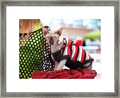 Naked Cat Devon At Show Framed Print by Arletta Cwalina