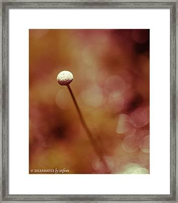 Naked Dandelion Framed Print by Stefanie Silva