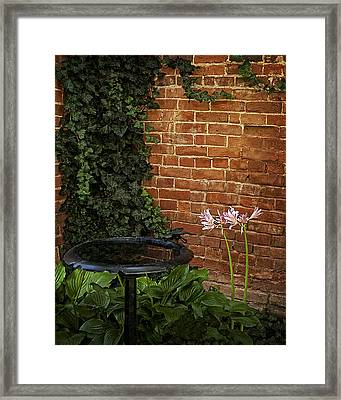 Naked Ladies In The Garden Corner Framed Print by Mitch Spence
