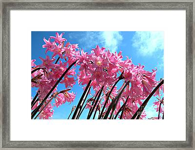 Naked Ladies Framed Print