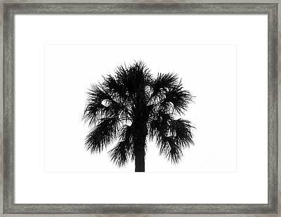 Naked Palm Framed Print by David Lee Thompson