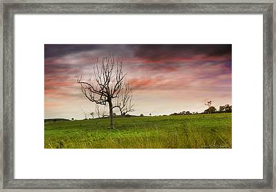 Naked Tree 01 Framed Print