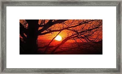 Naked Tree At Sunset, Smith Mountain Lake, Va. Framed Print