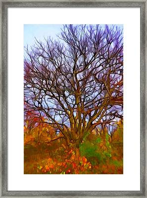 Naked Tree Framed Print