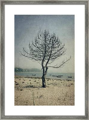 Framed Print featuring the photograph Naked Tree by Marco Oliveira
