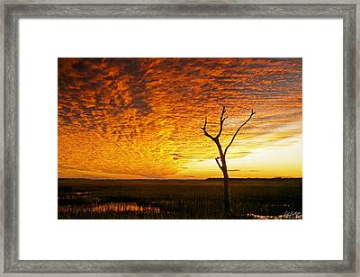 Naked Tree Framed Print by Phill Doherty