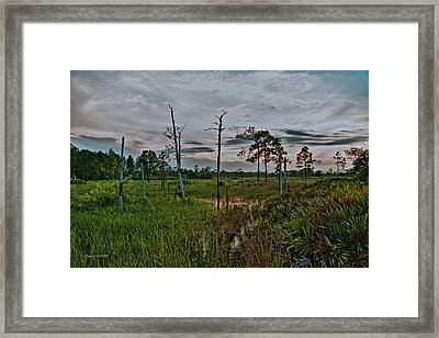 Naked Trees Swamp Framed Print