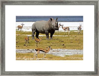 Nakuru Lake Framed Print by Paco Feria