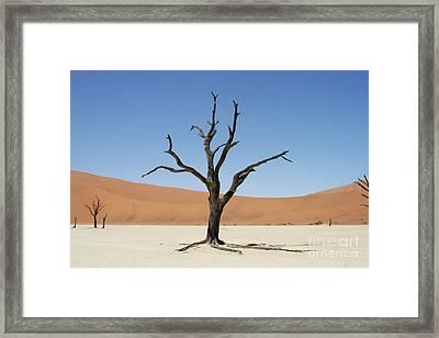 Namibia Desert Framed Print by Nichola Denny