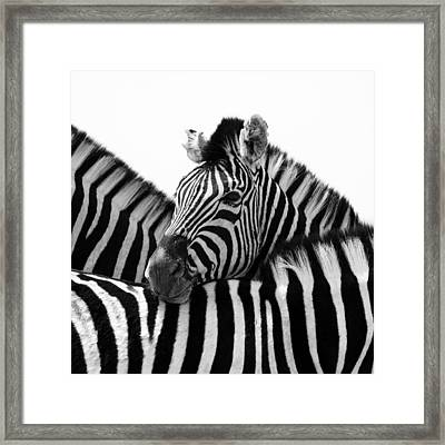 Namibia Zebras IIi Framed Print by Nina Papiorek