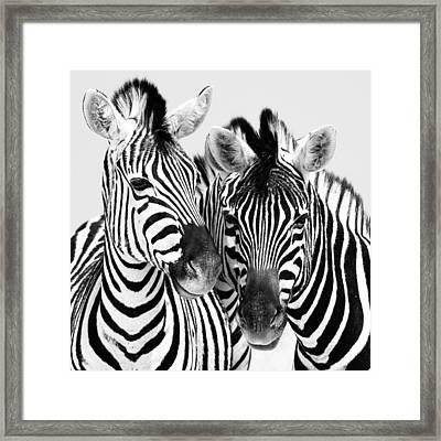 Namibia Zebras Iv Framed Print by Nina Papiorek