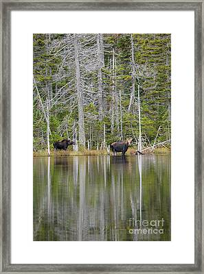 Nancy Pond - White Mountains New Hampshire Usa Framed Print