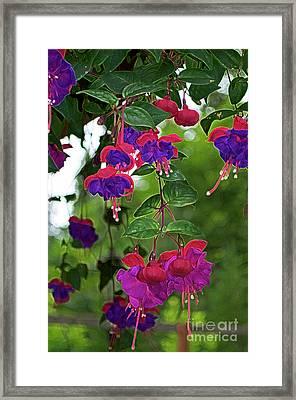 Nan's Fushia Framed Print by Gwyn Newcombe