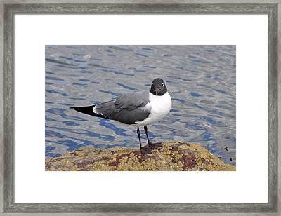 Bird Framed Print by Glenn Gordon