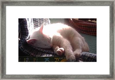 Nap Time Framed Print by Denise Fulmer