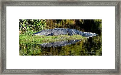 Nap Time Framed Print by Don Durfee