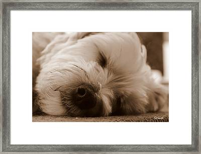 Nap Time Framed Print by Ed Smith