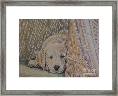Nap Time Framed Print by Gail Dolphin