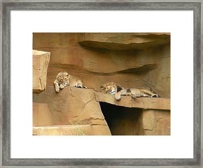 Nap Time Framed Print by Leeann Stumpf