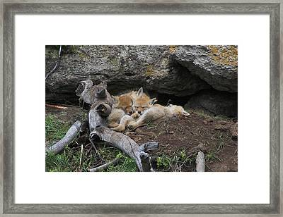 Framed Print featuring the photograph Nap Time by Steve Stuller
