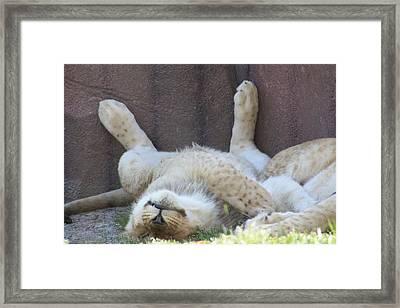 Nap Time Framed Print by Tonya Jones