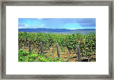 Framed Print featuring the photograph Napa by Corinne Rhode