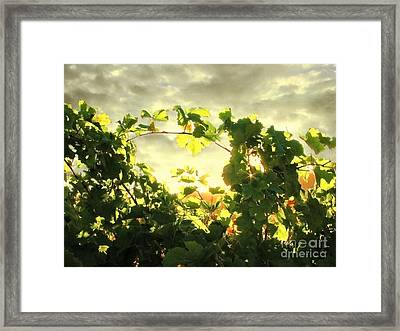 Napa Dusk Framed Print by Ellen Cotton