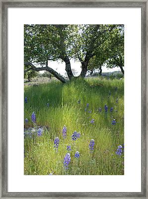 Napa Hills Meadow Framed Print by Dallas Hyatt