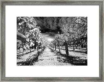 Napa Rows In Bw Framed Print by Mary Haber