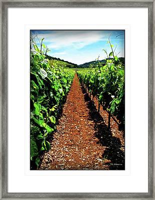 Napa Rows Of Grapes Framed Print