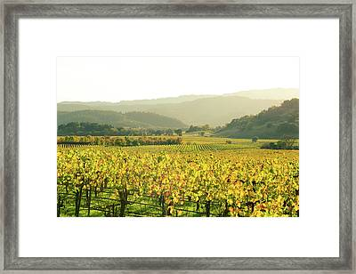 Napa Valley In Autumn Framed Print by Brandon Bourdages