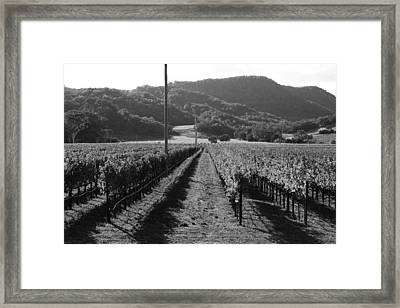 Napa Valley Vineyard .  Black And White . 7d9020 Framed Print by Wingsdomain Art and Photography