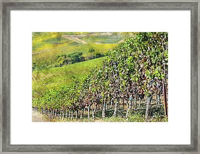 Napa Valley Vineyard In California Framed Print by Brandon Bourdages