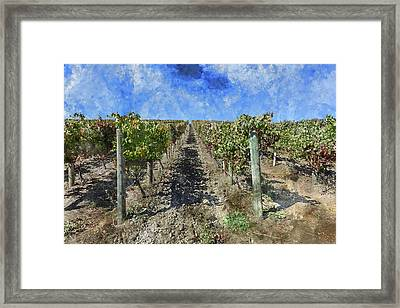 Napa Valley Vineyard - Rows Of Grapes Framed Print by Brandon Bourdages