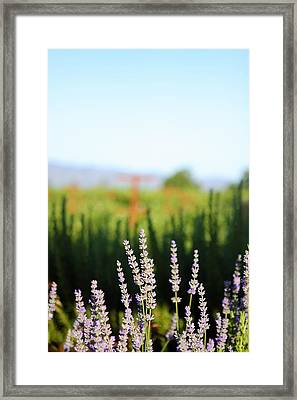Napa View Framed Print by Ty Helbach
