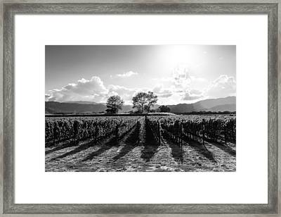 Napa Vineyard B/w Framed Print