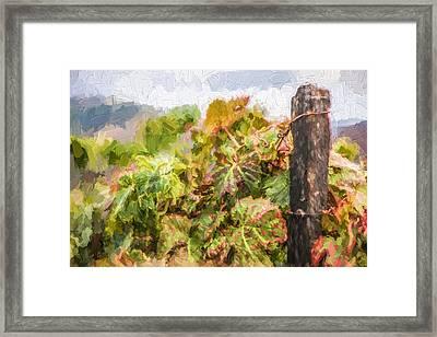 Napa Vineyard Framed Print by David Letts