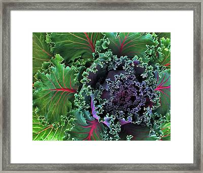 Naples Kale Framed Print