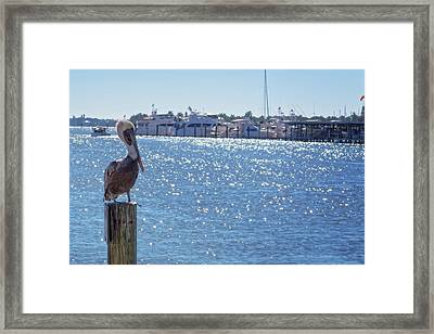Framed Print featuring the photograph Naples Pelican by Lars Lentz