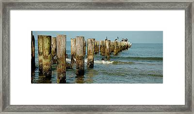 Naples Pier And Pelicans Framed Print