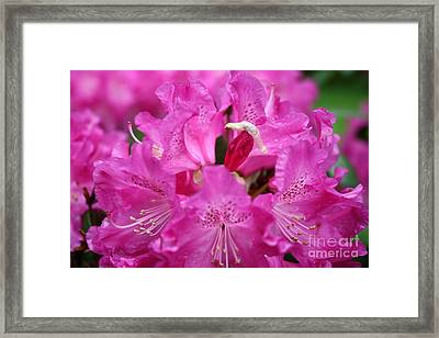Framed Print featuring the photograph Napolians Hat by Edward R Wisell