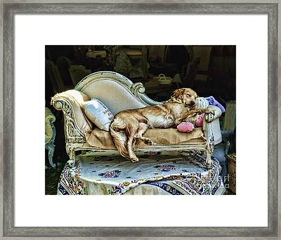 Napping Dog Promo Framed Print